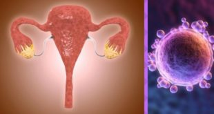 An overview of ovaries